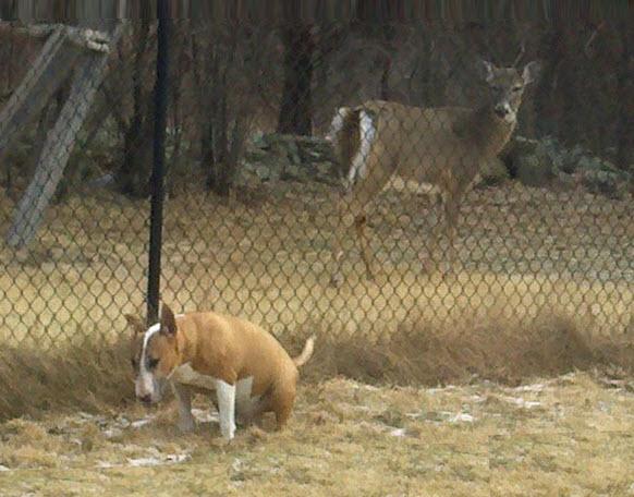 nathan-deer-poop-crop-fix-crop